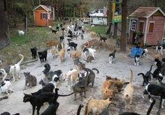 kampung kucing - Google Search