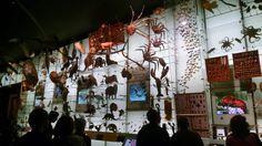 Natural Museum NYC