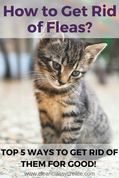 How To Get Rid Of Fleas In Your Home Top 5 Ways To Get Rid Of Them For Good Clean Classy In 2020 Fleas On Kittens Cat Fleas Cat Has Fleas