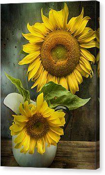 Sunflower Series II Print by Kathy Jennings