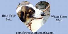 Heart disease is commonly seen in older (and some younger) pets. There are various forms and vet homeopathy and other holistic treatments can help.