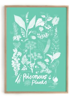 Frame not includedSize 50 x 70 cmEdition of 1000 piecesIllustrated by Lisa Grue Poisonous Plants, Our Love, Paper, Pretty, Nature, Color, Inspiration, Beautiful, Summer