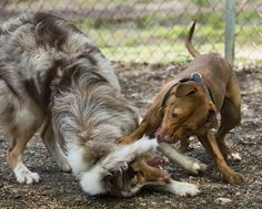 Watching dogs frolic gives us a glimpse into their minds.