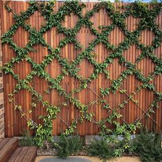 VERTICAL - We are loving how these Pandorea jasminoides - The Bower Plant are growing here. Even our client's loving it! Construction: by us Design by Proud member of We Are Love, Native Plants, Nativity, The Outsiders, Alternative, Vertical Gardens, Outdoor Structures, Landscape, Construction