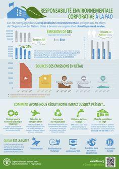 Responsabilité environnementale corporative à la FAO