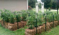 straw bale garden..going to try this, gotta be a way to eliminate the back breaking work and battles with weeds.