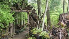 Enter here to Pat and Walt's Stumpery Garden. ‹ Dig Nursery