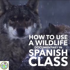 Ideas for Using a Wildlife Nature Documentary in Spanish Foreign Language Class Preschool Spanish, Elementary Spanish, Teaching Spanish, Elementary Schools, Spanish Teacher, Spanish Class, Free Spanish Lessons, Spanish Lesson Plans, Learn To Speak Spanish