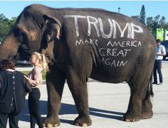 Annette the elephant has been all alone since the death of her friend years ago. She has been carted from state to state to entertain crowds in circuses. Demand Annette be retired to an accredited sanctuary.