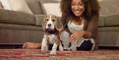 Puppy Training - Obedience Training Tips and Advice | Hill's Pet