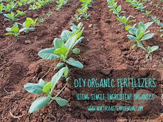 DIY Organic Fertilizer: Demystifying Single-Ingredient Fertilizers