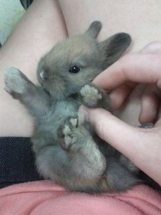 This little bunny when't to the market and this little bunny came running home.