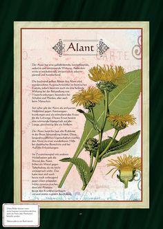 Alant - Alanttee