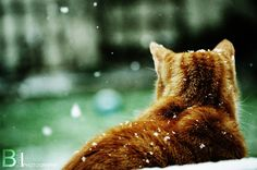 Snowed Cat by B3N-B4IL.deviantart.com on @deviantART