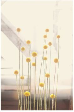 Craspedia/Billy Buttons! Had these in my wedding bouquet and the boutonierres.
