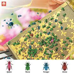 How It Works: Honeybee Society   Popular Science