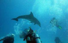 Sari Express Travel » Daily diving in hurghada