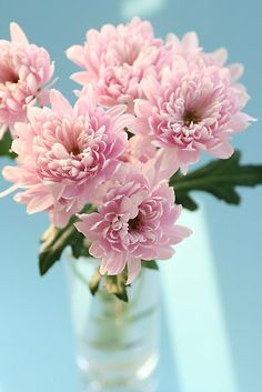 Chrysanthems on Turquoise by OldaSimek #flowers #bouquet