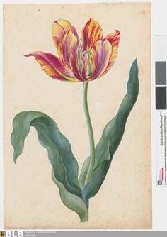 1730 Karlsruher Tulpenbuch,