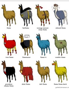 This is why llamas are awesome.