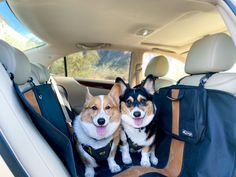Dog Hammock For Car, Back Seat Covers, Dog Car, Dog Travel, Wander, Your Dog, Car Seats, Corgi, Traveling