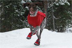 DOG POLAR TREX BOOTS