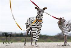 Waffle knit sleeves / White in IGGYplus italian greyhound clothes