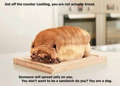"@Chrissy Dittus ""That is not a dog. It is a decorative piece of bread.""     Good joke Chrissy good joke."