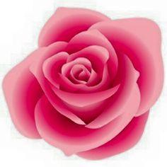 NEDVĚDOVCI - Ruže z papíru
