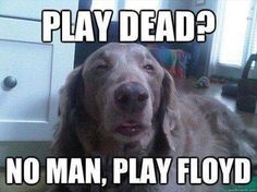Laughed hysterically!  (You have to be a Rocker to understand this one.)
