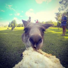 Don't forget to feed the Kangaroos! II Youth With A Mission II YWAM Newcastle www.ywamnewcastle.com