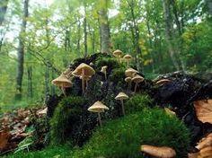 Risultati immagini per autunno funghi e castagne