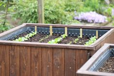 Beets, Succulents, Garden, Plants, Pallet, Companion Planting, Ornamental Plants, Compost, Garten