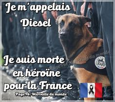 Diesel (gestorben am 18. November 2015 in Saint-Denis) war eine französische Polizeihündin der Spezialeinheit Recherche Assistance Intervention Dissuasion (RAID). Die Belgische Schäferhündin, die als Sprengstoffspürhund eingesetzt wurde, wurde während eines Anti-Terror-Einsatzes in Saint Denis getötet