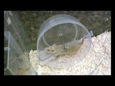 How to make a mouse/hamster wheel out of wire and a tupper - YouTube