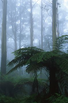 The cloud forests of the Dandenong Ranges. | 34 razones por las que Australia es el lugar más hermoso en la tierra