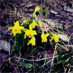 Kevät