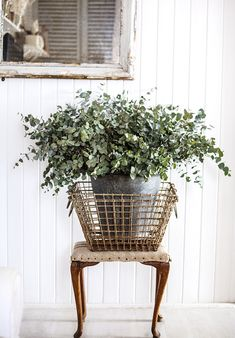 eucalyptus leaves in old tin bucket, wire baskets, wooden stool with linen cover.  Photo by stylist Kara Roselund.