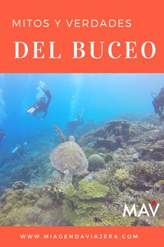 Mitos y verdades del buceo recreativo. #dive #buceo #bucear Travel Blog, Caribbean, Movie Posters, Movies, Asia, Collection, Truths, Paradise Beaches, Beautiful Beaches