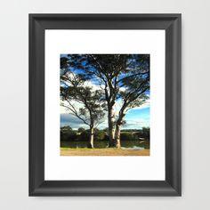 Eucalyptus native Trees, River Bank, Sky, Clouds, Reflections, Countryside, Australia.