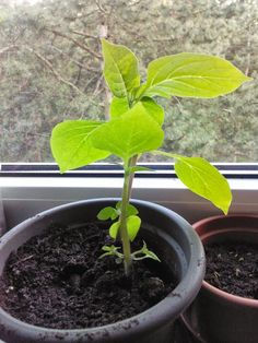 My Orange Tree - 5 weeks