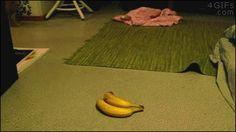 Damn those are real bananas!