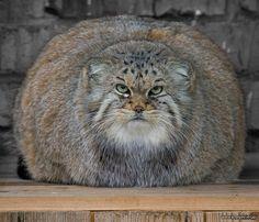 I'm not fat, I'm fluffy!