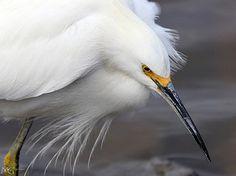 San Joaquin Wildlife Sanctuary 1.21.12 6