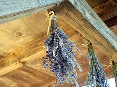 How to Dry Your Home Grown Lavender in 7 Steps