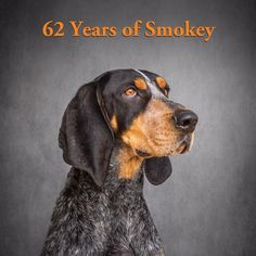 For more than sixty years, Smokey has been running the sidelines at football games and bringing joy to Vols young and old. Find out more about the blueticks that have come before and the hound whose howl now echoes in the stands. Tennessee Mascot, Tennessee Girls, Tennessee Football, Tennessee Volunteers, Tennessee Knoxville, Tennessee Waltz, Tn Vols Football, College Football, I Love Dogs