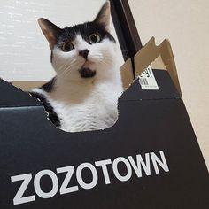 届いた  #ZOZOTOWN #かりん様 #癒し猫 #愛猫 #雑種猫#ねこら部#ねこ#ねこ部#猫#ねこすた#白黒猫部#にゃんだふるらいふ#牛柄猫#家族猫#みんねこ#고양이#japan#kitty#ネコアレルギー#家猫