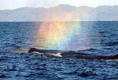 Whale in kauai #whales #kauai #rainbow
