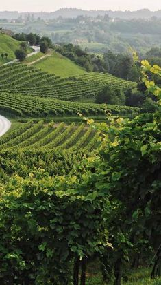 The elegance of the land in Friuli, Italy, where our Sparkling Wine is from, translates directly into the elegant taste of SYLTBAR Prosecco. And because of its four month fermentation process, our Prosecco has only 49 calories per 6oz glass#Prosecco#Italy#Wine#Health#Style#Beautiful #Elegant#Sun#Gorgeous#Luxury#Delicious