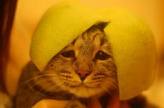 """""""No…I'm Not Drunk, I'm Still Drinking…"""" Funny Cat Photos, Funny Meme Pictures, Funny Animal Pictures, Weird Pictures, Animals And Pets, Baby Animals, Funny Animals, Cute Animals, Animal Babies"""